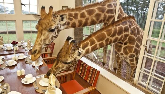 giraffehotelblog12