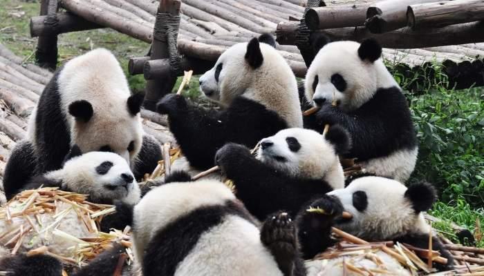 china_blog12