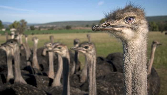 Paphos Ostrich Farm