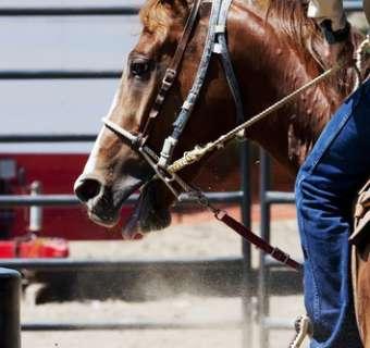 Rodeo in Wichita