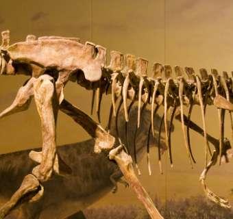 dinosaur-blog