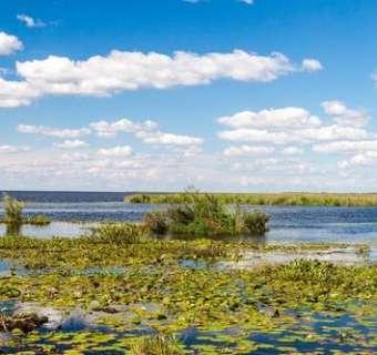 wetlands-main
