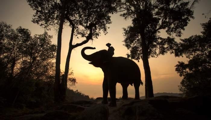 bucketlist_elephant