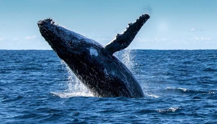 bucketlist_whalewatching