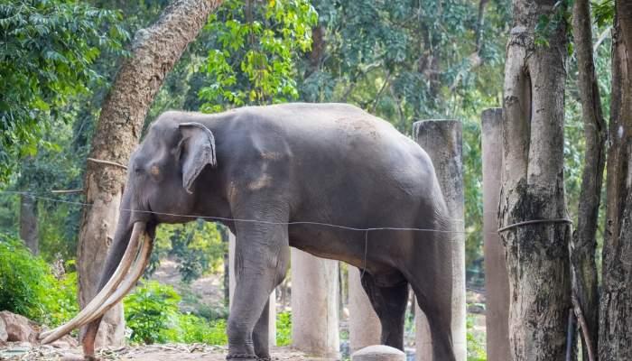 huahin_elephant