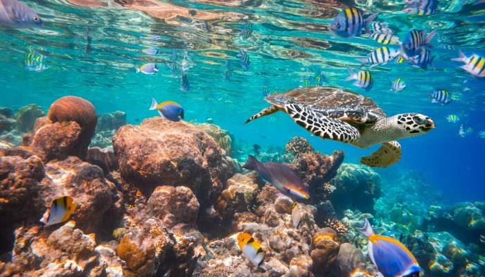 snorkel maldives