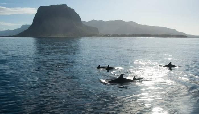 dolphinsmauritius