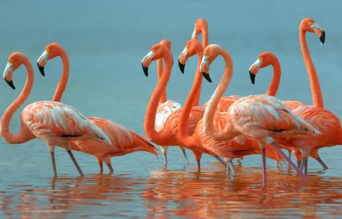 flamingos-in-isla-holbox