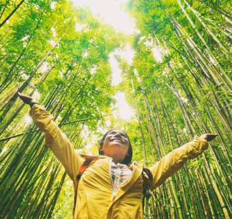 Photo of a woman in a yellow coat standing with her arms up in a green bamboo forest