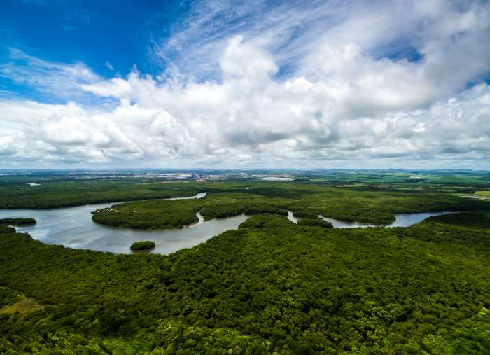 Aerial view of the Amazon Rainforest with with Amazon River winding through