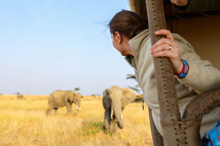 A woman leans out of a safari jeep to see elephants