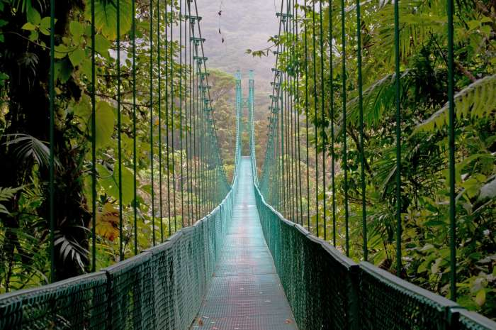 Green hanging bridge in the canopy of Monteverde Cloud Forest, Costa Rica