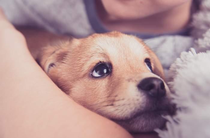Cute puppy cuddled by child