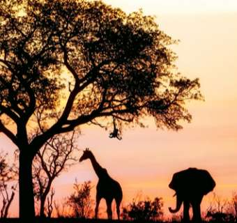 the big five silhouetted against orange sunset sky