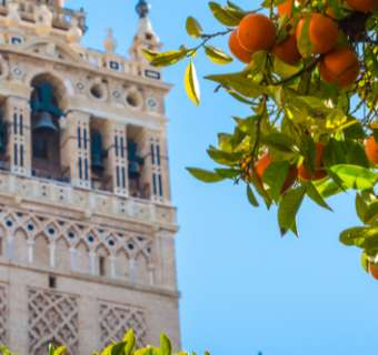 Photograph of a Seville courtyard with orange trees