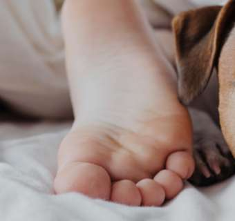 Dog under the covers with children's feet