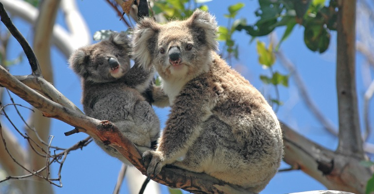 Australia - image 4