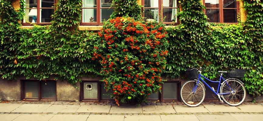 Denmark - image 5