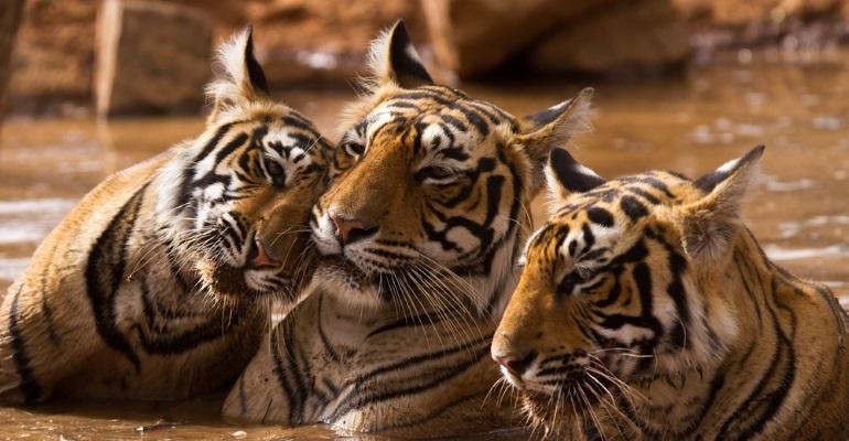 India - image 4